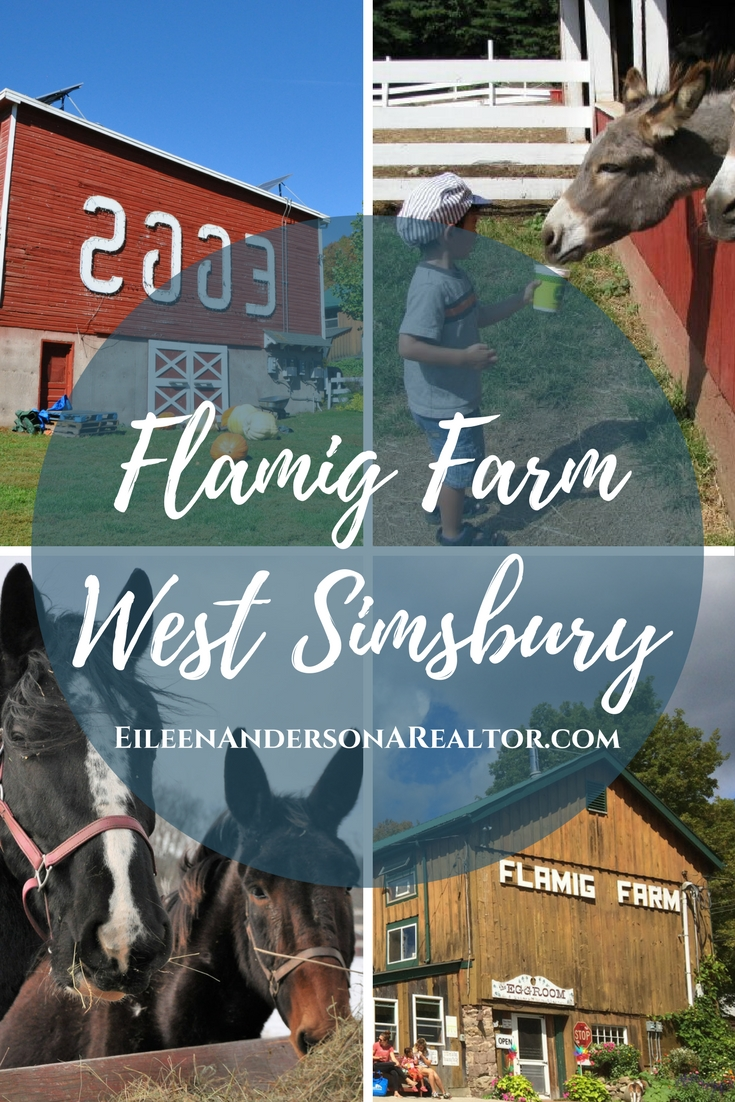 Flamig Farm, West Simsbury, Connecticut, eggs, horses, compost, things to do with kids, haunted hay ride, sunflowers