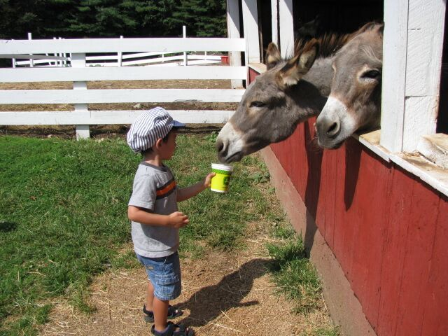 Things to do CT Farms - Petting Zoo, Flamig Farm, Westmoor Park, Petting Zoos CT