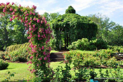 Public Gardens in Connecticut, Elizabeth Park Rose Gardens, Things to do in Connecticut. West Hartford, CT ll sun gardens, full shade gardens