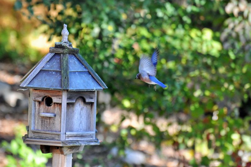 Blue Bird West Simsbury CT