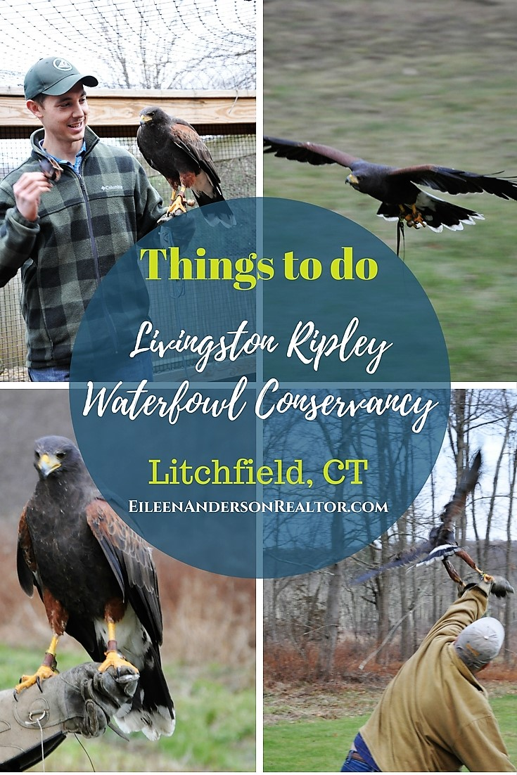 Livingstone Waterfowl Conservatory Litchfield CT