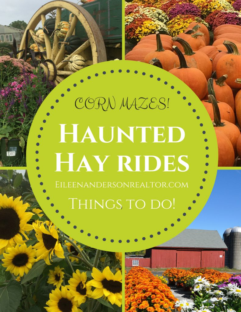 Things to do CT Haunted Hay Rides, Sunflower & Corn Mazes, Apple Picking.