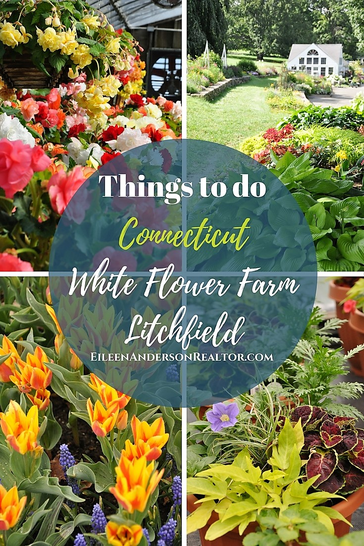 Things to do Connecticut, Perennial Beds, Annuals, White Flower Farm Litchfield, Shade Gardens, Trees, Shrubs, Bulbs, Bird Baths, Landscape Design