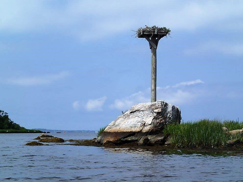 Bird Nest Old Lyme - Nature Preserve - Wildlife