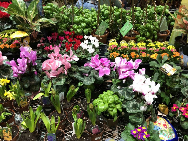 Connecticut Growers, spring annuals and bulbs.