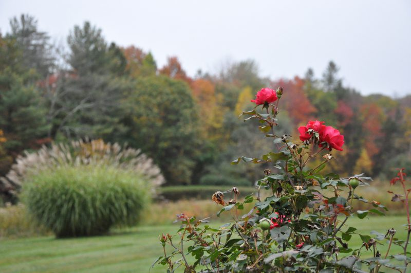 view of pond, fields Gardens 208 Westledge