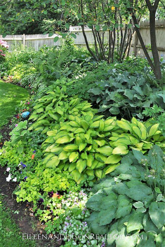 Shade Gardens Hostas