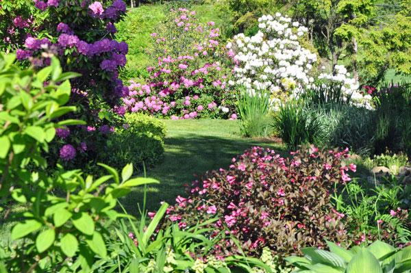 June shrubs