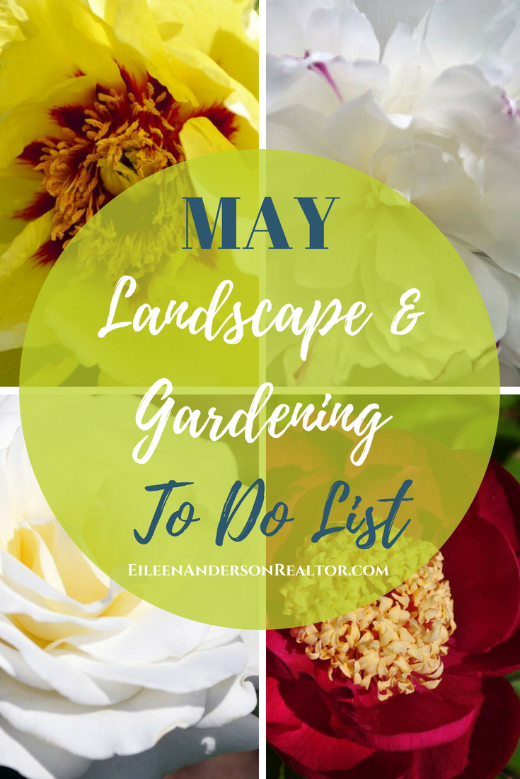 may-gardening-checklist-peonies