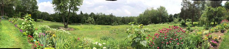 panoramic-wildflowers