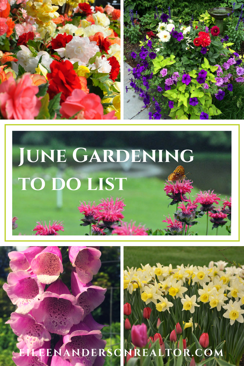 June Gardening to do List. Home Improvement, DIY, Landscape Design, Gardening Tips, June Gardening to do List, Home Staging, Outdoor Living, Real Estate, Shade Gardens, Lawn maintenance. #gardening #realestate