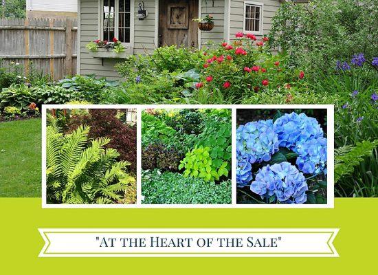 Shade-garden-ideas-tips-landscape-design