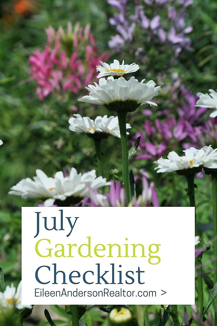 july-gardening-checklist-daisies