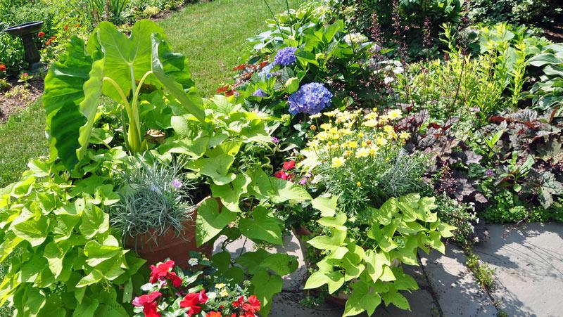 Shade gardens, elephant ears, blue hydrangea, coral bells, impatiens, hosta.