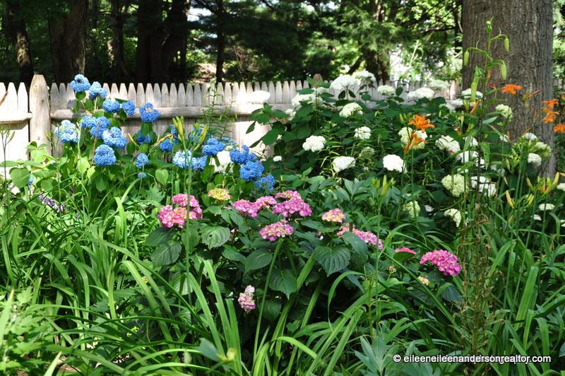 shade gardens that inpire. hydrandeas