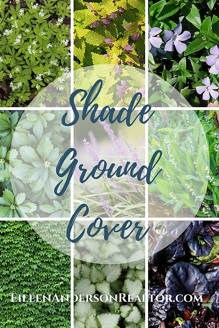 Ground cover plants for shade gardens.