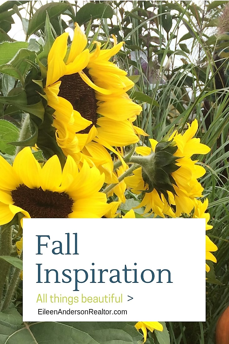 Get inspired! Fall Gardening! fall gardenig checklist to make next years garden outstanding! Home Improvement, Lawn Care, Gardening ideas & tips, home staging your yard, gardening, realtor simsbury, real estate simsbury, perennials, lawn maintenance