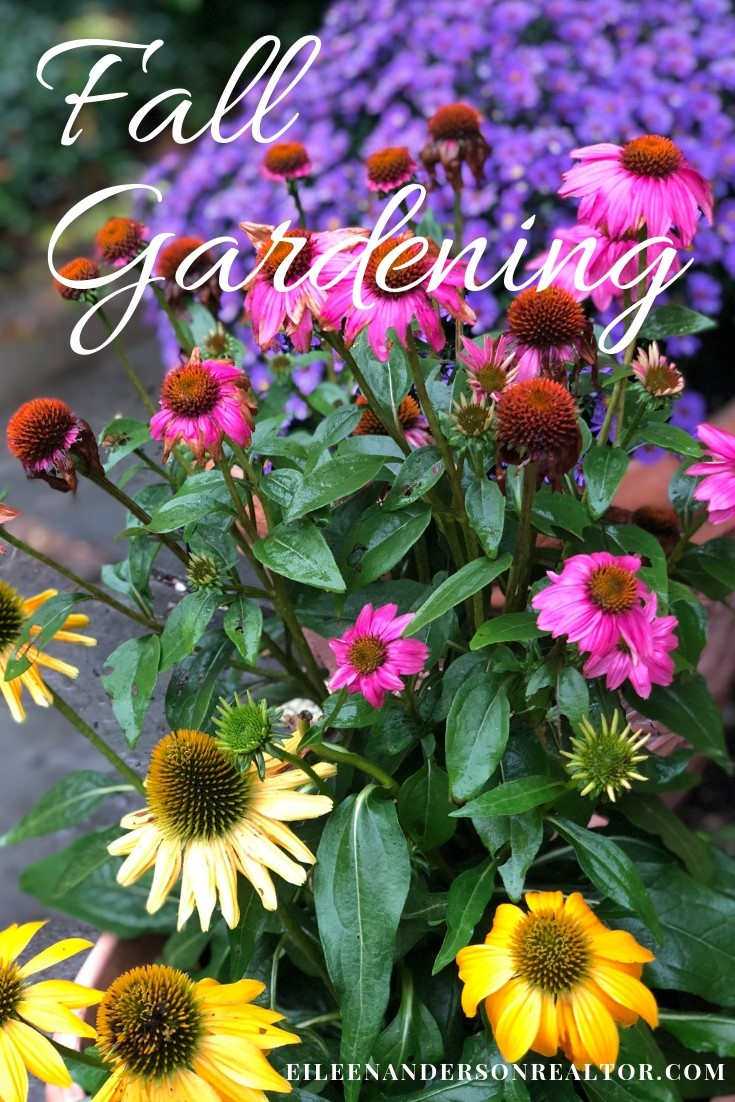 fall-gardening-checklist-asters. realtor simsbury, gardens simsbury, fall gardening, home improvement, diy, outdoor living, real estate
