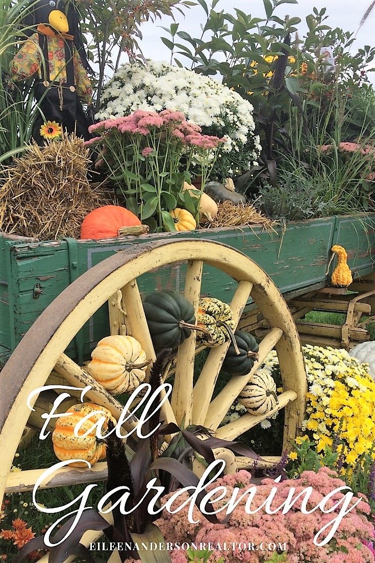 fall gardening, mums, perennials, fall blooming plants, to do checklist, landscape design, home staging, outdoor living areas, soil prep, lawn maintainence